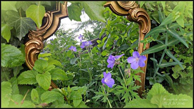 20160526_185511 Fleurs au miroir