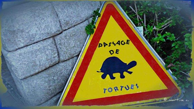Passage de tortues