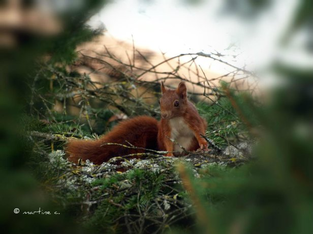 ecureuil-3