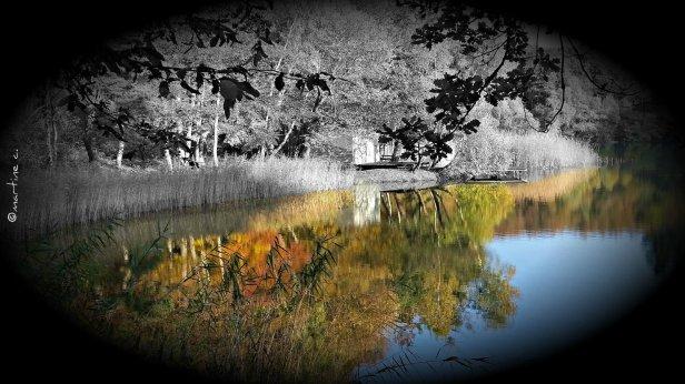 20161030_152741-automne
