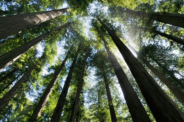 """© Laurent NICOD 2013, pour le concours photos """"Regards sur la forêt""""."""