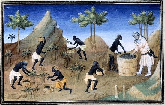 La récolte du poivre à Coilun. Enluminure extraite de l_édition de 1412 du Livres des Merveilles du monde de Marco Polo