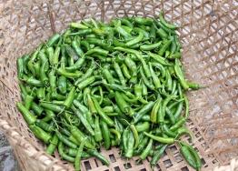 piment-vert-Bhoutan-M-Cambornac.jpg