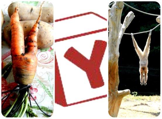 Y collage